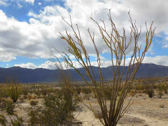 Anza Borrego: Following the terrain